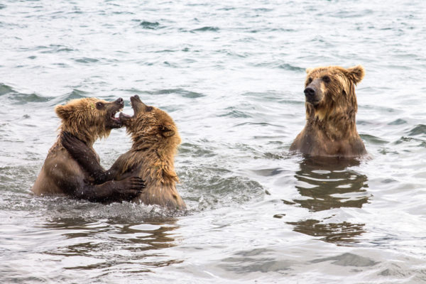 Kamchatka diaries: How to meet a bear and survive
